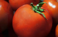 Tomates grappe