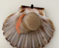 Coquilles st jacques.