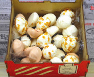 Assortiment de Minis Meringues